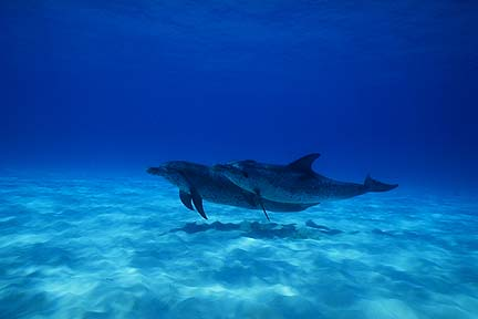Another picture of 2 dolphins near the bottom